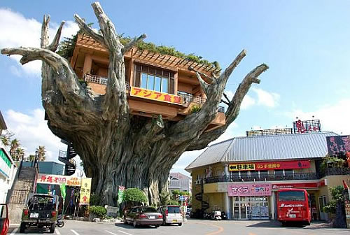 crazy-banyan-treehouse-cafe-in-japan-1